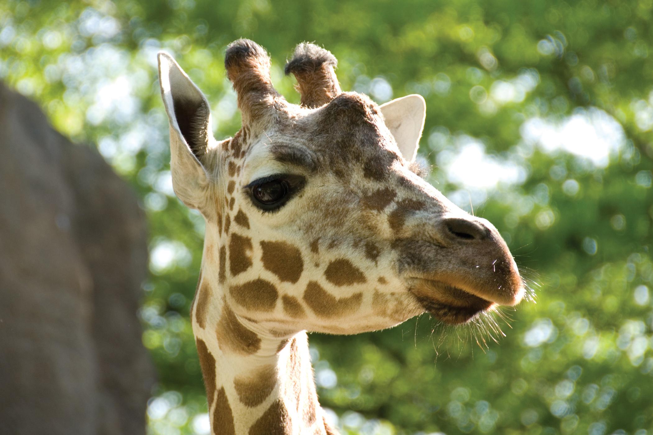 The Philadelphia Zoo Website